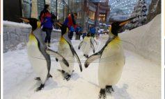 """Ιατρική παρέμβαση στη Γερμανία: """"Να περπατάτε σαν... πιγκουίνοι""""!"""