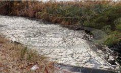 Εκατοντάδες νεκρά ψάρια στα Ιαματικά Λουτρά του Καϊάφα