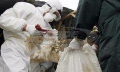 Περιφέρεια Κεντρικής Μακεδονίας: Σε εγρήγορση οι κτηνιατρικές υπηρεσίες για τη γρίπη των πτηνών