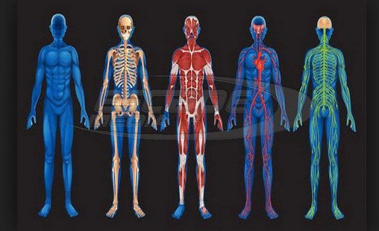 Οι Μαγικοί Αριθμοί του Ανθρώπινου Σώματος