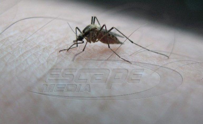 Ιός του Δυτικού Νείλου: Στους 15 οι νεκροί – Εκπονείται σχέδιο για τα λοιμώδη νοσήματα από κουνούπια