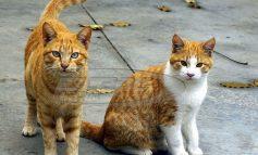 Ιδιοκτήτες ζώων προσοχή! Με παράσιτο στο πεπτικό οι μισές γάτες στην Ελλάδα - Ο κίνδυνος για τον άνθρωπο