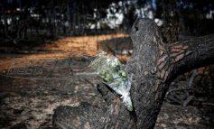 Κατέληξε η μητέρα του 6μηνου βρέφους της φονικής πυρκαγιάς στο Μάτι