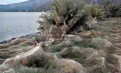 Λύθηκε το μυστήριο με το πέπλο αράχνης που «κατάπιε» βλάστηση στο Αιτωλικό