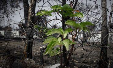 Έκθεση για το Μάτι: Λανθασμένη εκτίμηση της φωτιάς - Τι έπρεπε να γίνει για να μην θρηνήσουμε νεκρούς