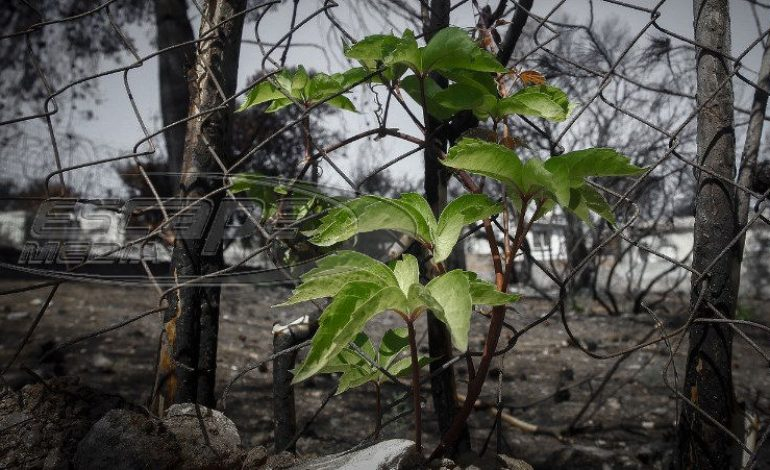 Έκθεση για το Μάτι: Λανθασμένη εκτίμηση της φωτιάς – Τι έπρεπε να γίνει για να μην θρηνήσουμε νεκρούς