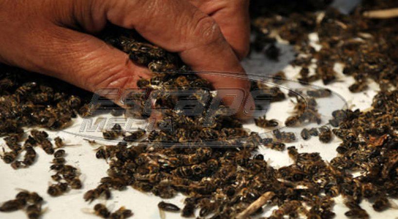 Ο μεγαλύτερος ΔΟΛΟΦΟΝΟΣ των μελισσιών μας αυτή τη περίοδο…. Δώστε μεγάλη ΠΡΟΣΟΧΗ