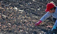 Μέχρι πότε είναι η προθεσμία για το βοήθημα των 1000 ευρώ σε πολύτεκνες αγρότισσες από τον ΟΠΕΚΑ