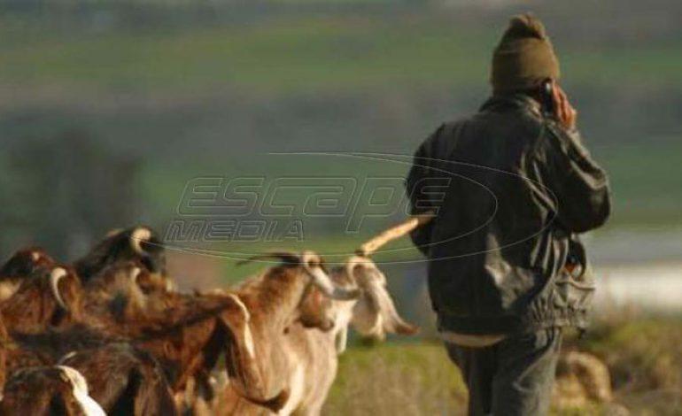 Μετανάστες βοσκοί σώζουν την Ελληνική κτηνοτροφία