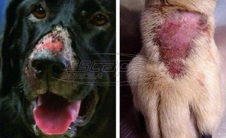 Ηνωμένο Βασίλειο: Μυστηριώδης ιός σκοτώνει ένα σκυλί την εβδομάδα