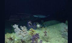 Μικρόβια που τρώνε πετρέλαιο βρέθηκαν στο μεγαλύτερο βάθος των ωκεανών