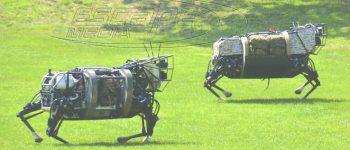 Αγελάδα-ρομπότ βόσκει στα ιρλανδικά λιβάδια και παράγει γάλα με ελάχιστο κόστος-video-