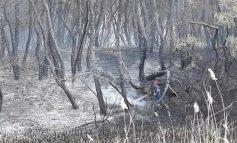Οικολογική καταστροφή στη Στροφυλιά: 2.000 στρέμματα παρθένου δάσους μετατράπηκαν σε στάχτη