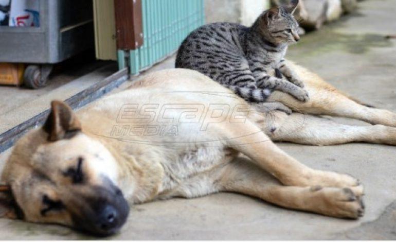 Αδέσποτα ζώα: Έκκληση από φιλοζωικές λόγω καύσωνα – «Βάλτε τους λίγο νερό και μην τα ενοχλείτε»