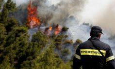 """Φωτιές: Πάνω από 1000 πυροσβέστες """"πολεμάνε"""" 56 δασικές πυρκαγιές"""