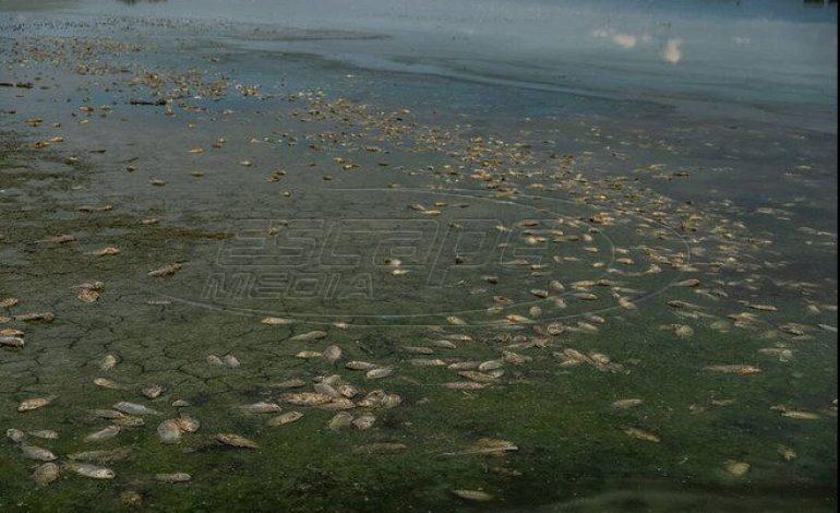 «Νεκροταφείο» ψαριών η λίμνη Κορώνεια