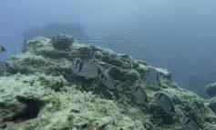 «Εισβολή» ψαριών από την Ερυθρά Θάλλασα - Ετοιμάζονται οδηγίες