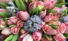 Ο ερχομός της άνοιξης με τα ωραιότερα λουλούδια !