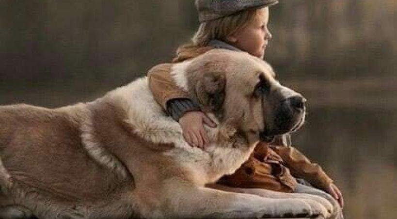 Παγκόσμια Ημέρα Αδέσποτων Ζώων: Ευχή μας κάποια στιγμή να μην υπάρχει λόγος επετείου